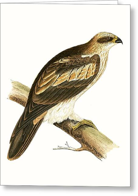 Booted Eagle Greeting Card by English School