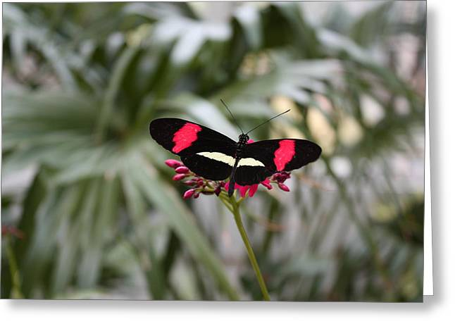 Borboleta Butterfly Greeting Card