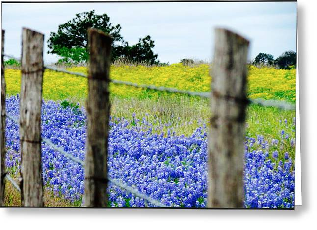 Border Blue Greeting Card