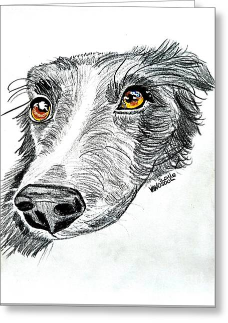 Border Collie Dog Colored Pencil Greeting Card by Scott D Van Osdol