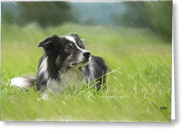 Border Collie - Dwp2189332 Greeting Card