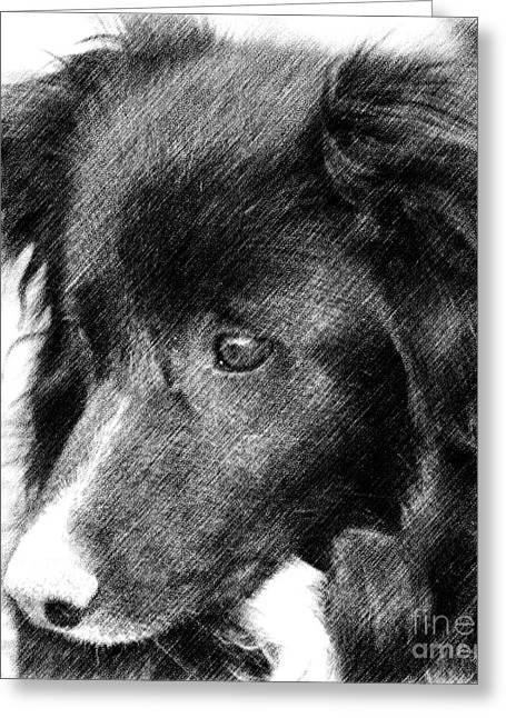 Border Collie In Pencil Greeting Card