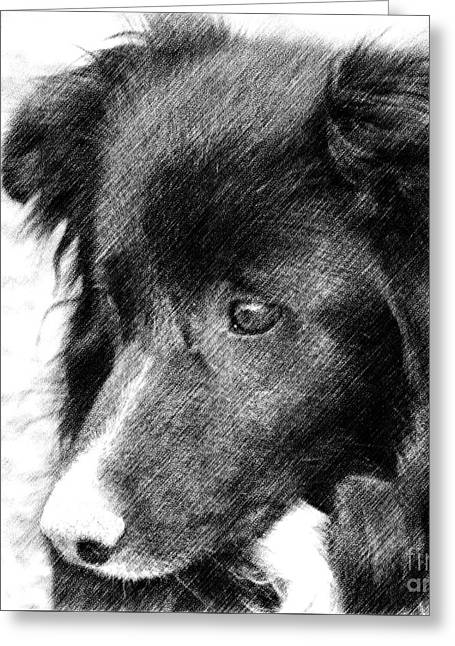 Border Collie In Pencil Greeting Card by Smilin Eyes  Treasures