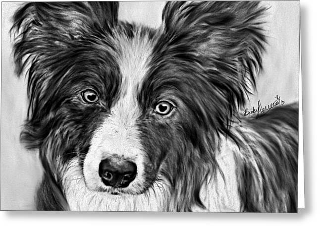 Border Collie Stare Greeting Card