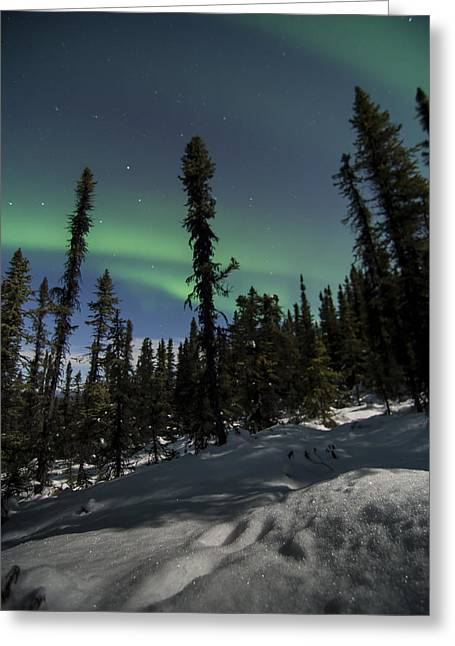 Boreal Forest Essence Greeting Card