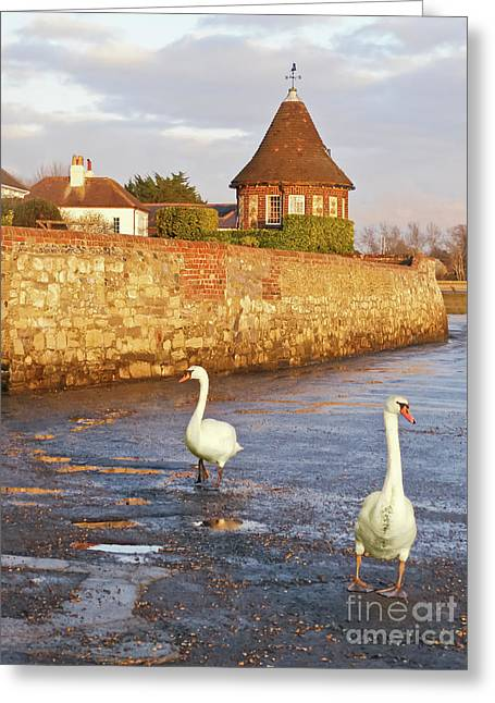 Bosham Swans Out For A Stroll Greeting Card