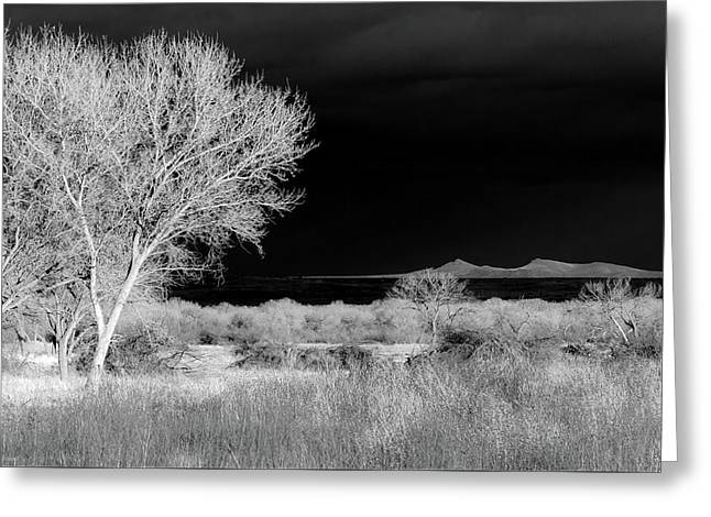 Bosque Del Apache - Infrared Greeting Card
