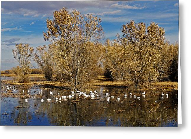 Bosque Del Apache Greeting Card by Kurt Van Wagner