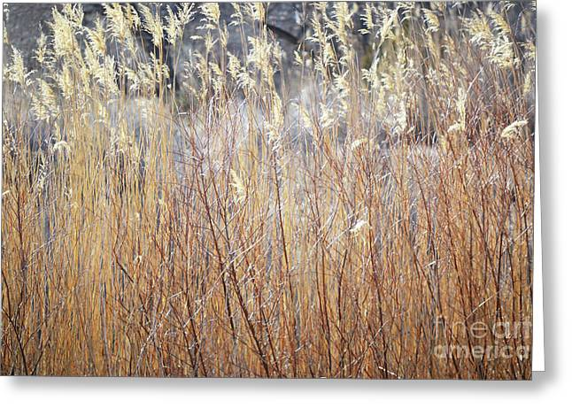 Greeting Card featuring the photograph Bosque Desert Willows by Andrea Hazel Ihlefeld