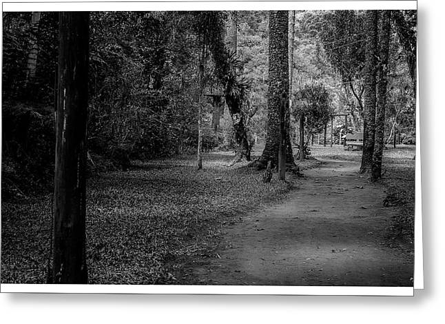 Bosque Do Silencio-campos Do Jordao-sp Greeting Card