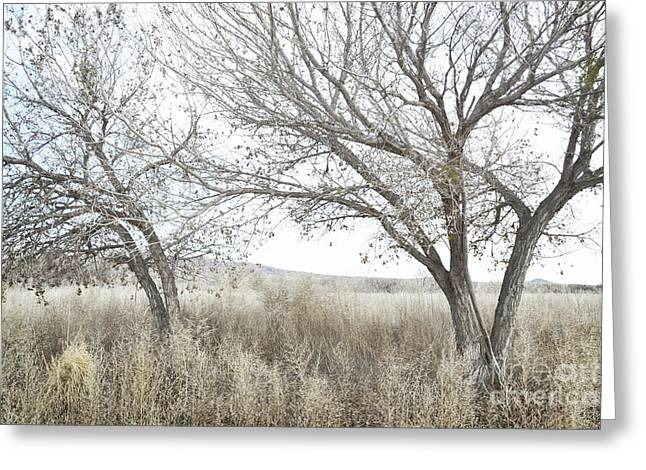 Greeting Card featuring the photograph Bosque Dreamy Tree Field by Andrea Hazel Ihlefeld