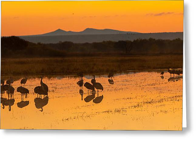 Bosque Sunrise Greeting Card