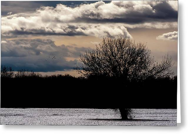 Greeting Card featuring the photograph Bosque Sunset by Britt Runyon