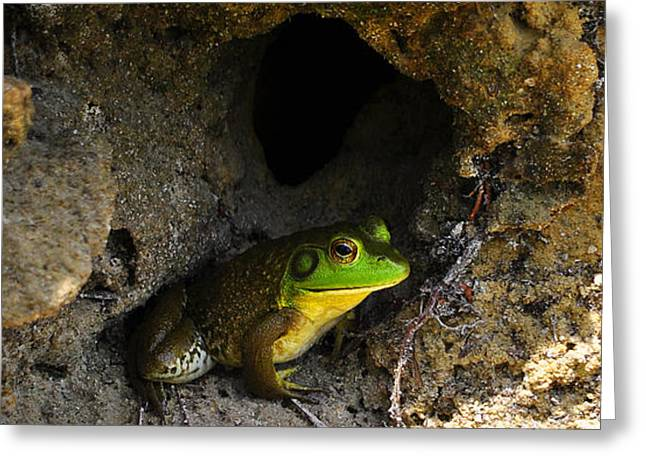 Greeting Card featuring the photograph Boss Frog by Al Powell Photography USA