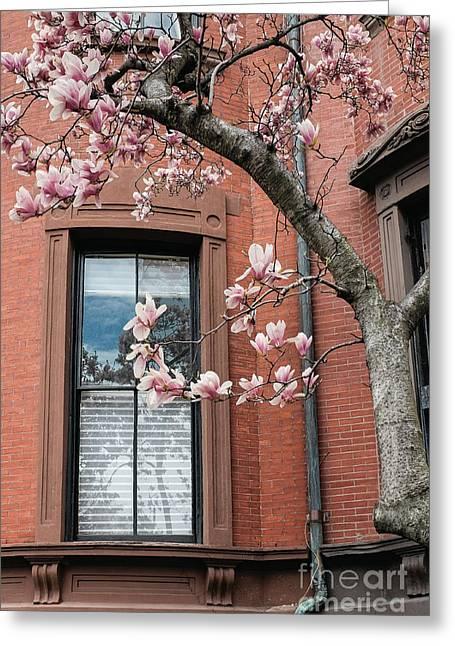 Boston Back Bay Magnolias Greeting Card by Edward Fielding