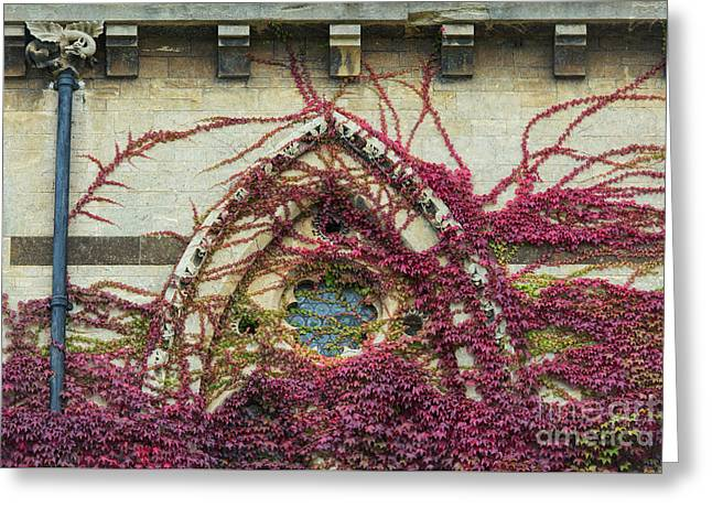 Boston Ivy At Christ Church College Greeting Card by Tim Gainey