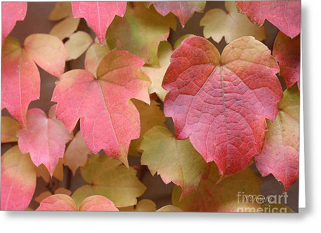 Boston Ivy Turning Greeting Card
