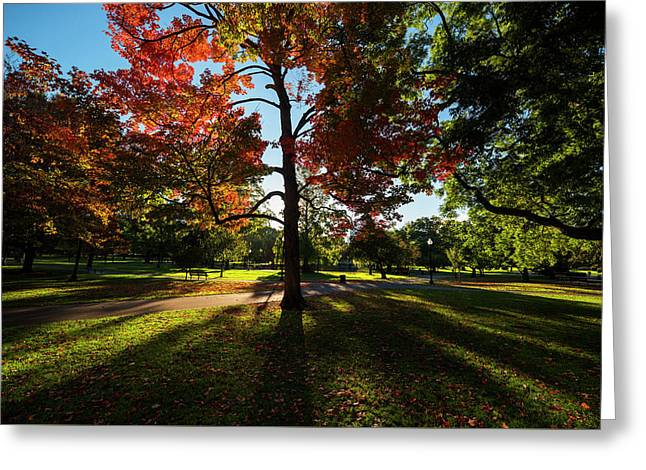 Boston Public Garden Autumn Tree Morning Light Greeting Card by Toby McGuire