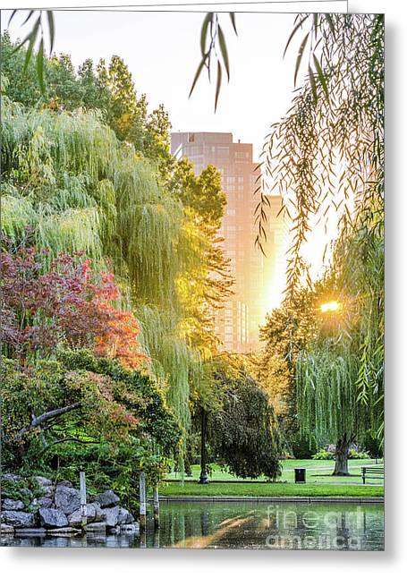 Boston Public Garden Sunrise Greeting Card