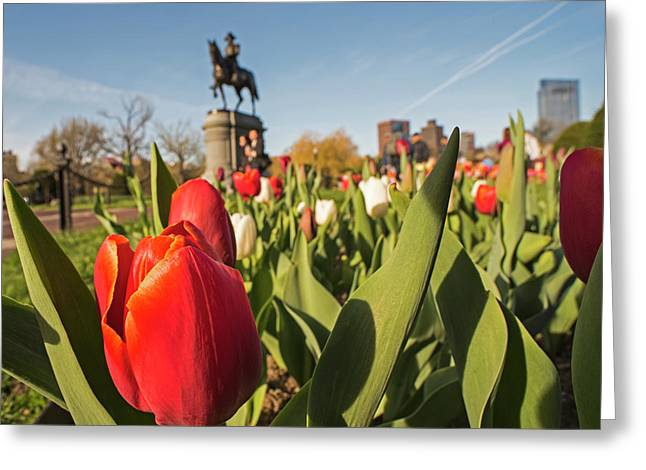 Boston Public Garden Tulips And George Washington Statue 2 Greeting Card