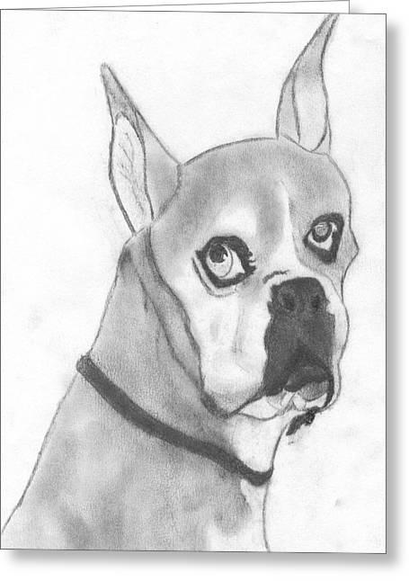 Boston Terrier Greeting Card by Josh Bennett