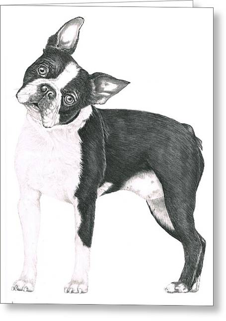 Dog Pencil Greeting Cards - Boston Terrier Greeting Card by Murphy Elliott