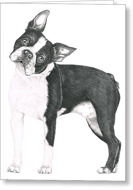 Boston Terrier Greeting Card by Murphy Elliott