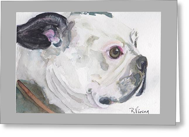 Boston Terrier Greeting Card by Raelene Vining
