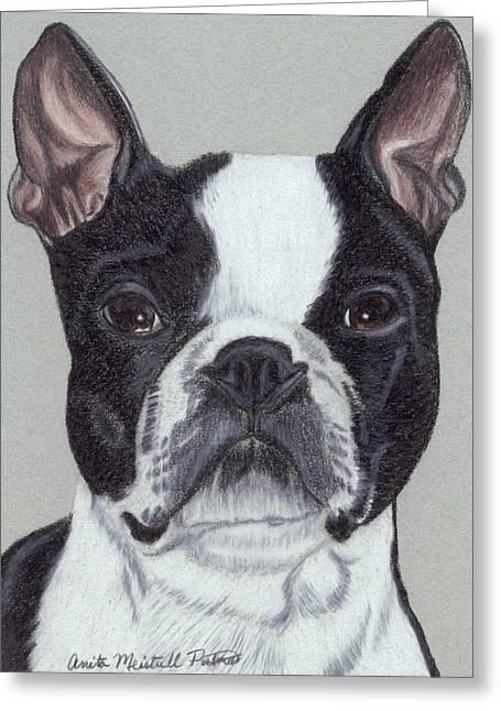 Boston Terrier Vignette Greeting Card by Anita Putman