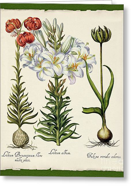 Botanica Nostalgia IIi Botanical Study Greeting Card