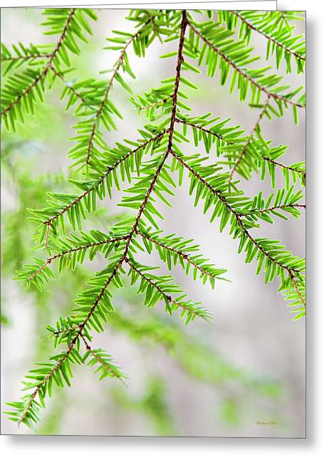 Greeting Card featuring the photograph Botanical Abstract by Christina Rollo