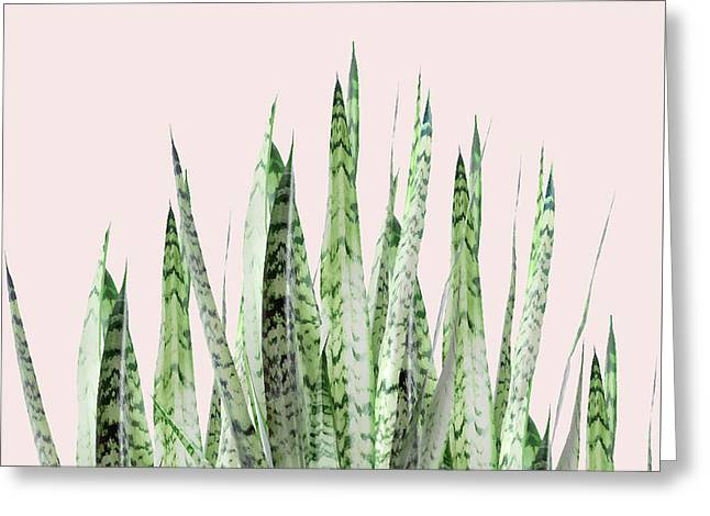 Botanical Balance Greeting Card