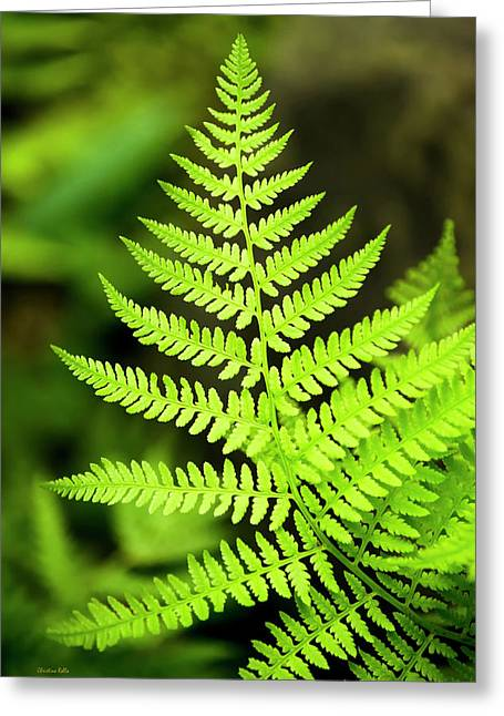 Botanical Fern Greeting Card
