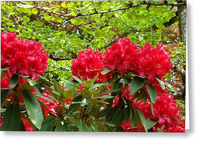 Botanical Garden Art Prints Red Rhodies Trees Baslee Troutman Greeting Card by Baslee Troutman