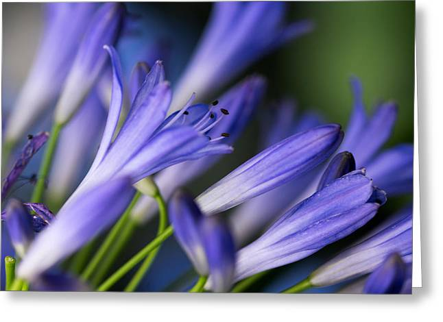 Botanical Garden Flower 1 Greeting Card by Andy Fung