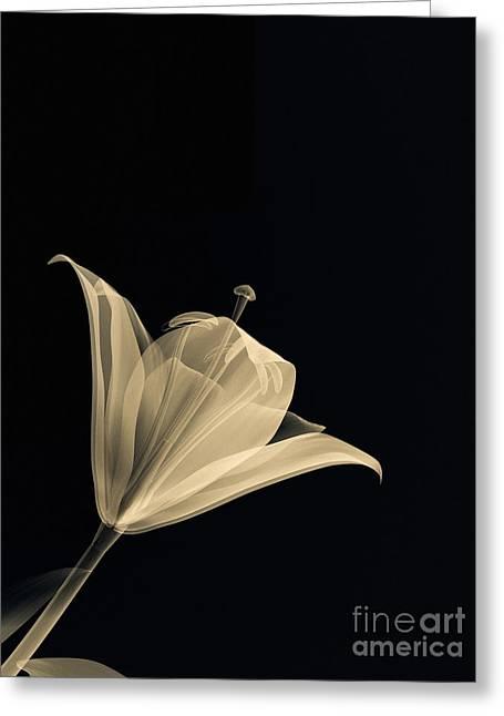 Botanical Study 3 Greeting Card by Brian Drake - Printscapes