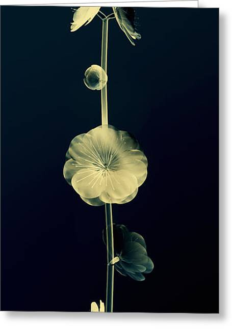Botanical Study 6 Greeting Card by Brian Drake - Printscapes