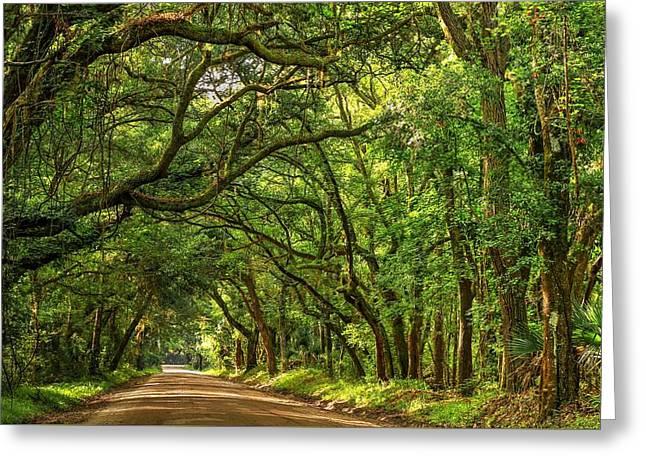 Botany Bay Edisto Island South Carolina Road Light And Shadow Greeting Card by Carol R Montoya