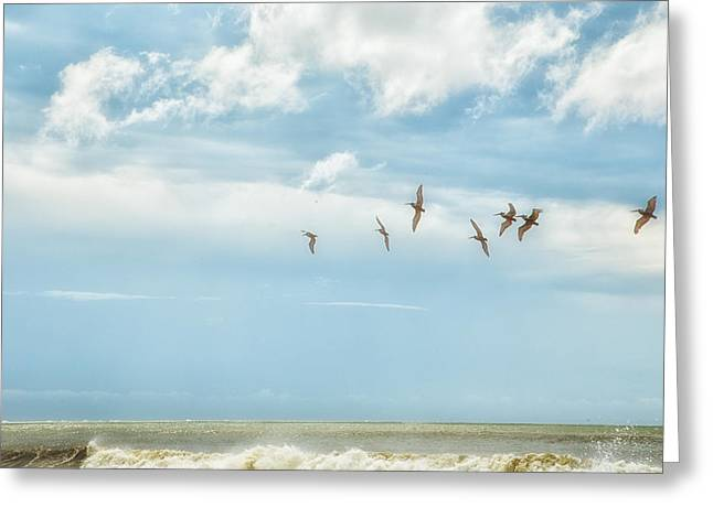 Botany Bay Pelicans Greeting Card