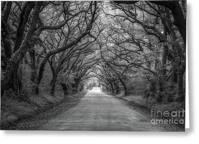 Botany Bay Road Black And White Greeting Card by Michael Ver Sprill