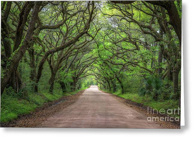 Botany Bay Road  Greeting Card by Michael Ver Sprill