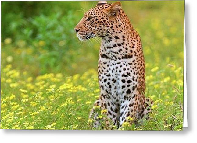 Botswana Leopard  Greeting Card by Happy Home Artistry