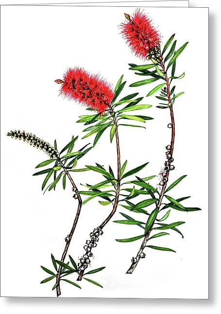 Greeting Card featuring the painting Bottle Brush by Heidi Kriel