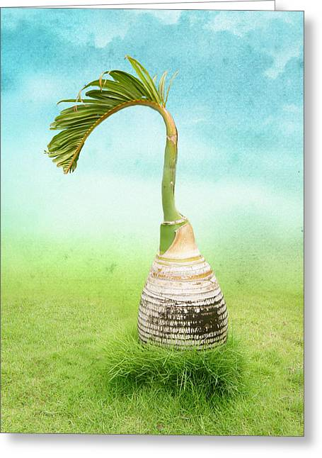 Bottle Palm Tree Greeting Card by Art Spectrum