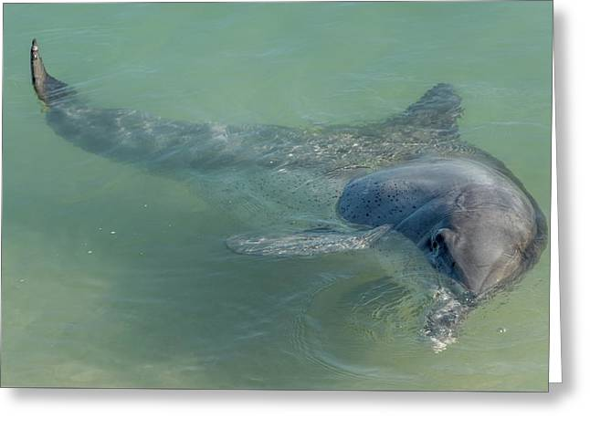 Bottlenose Dolphin Greeting Card by Martin Capek