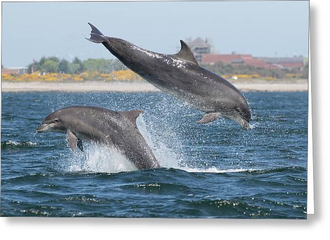 Greeting Card featuring the photograph Bottlenose Dolphin - Moray Firth Scotland #48 by Karen Van Der Zijden