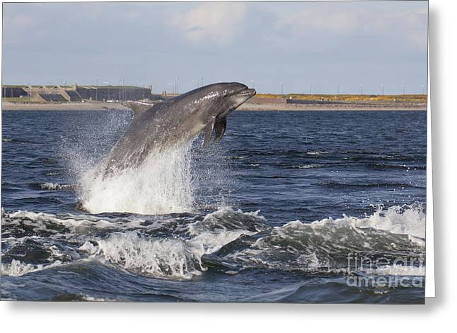 Bottlenose Dolphin - Scotland  #26 Greeting Card
