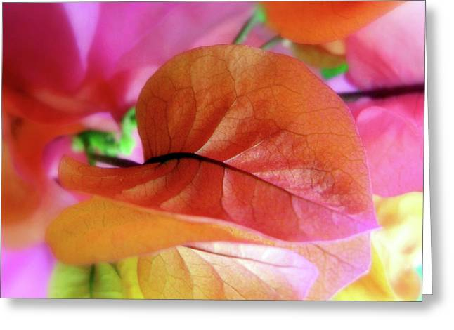 Bougainvillea Greeting Card by Jessica Jenney