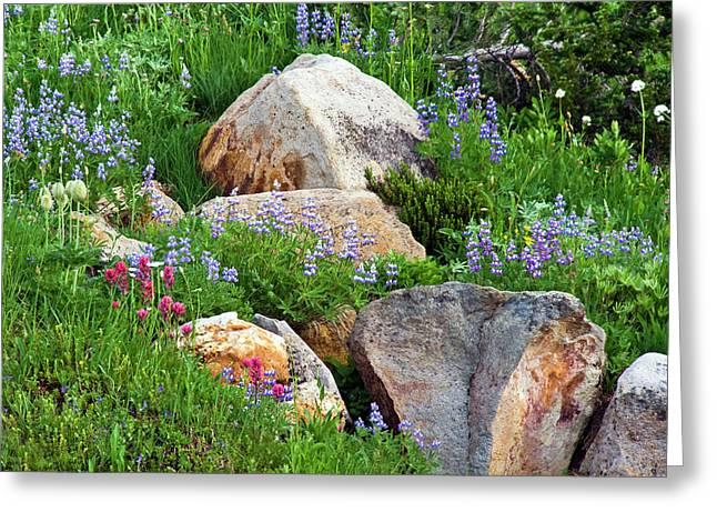Boulder Blooms Greeting Card