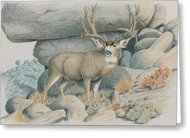 Boulder Buck  Greeting Card